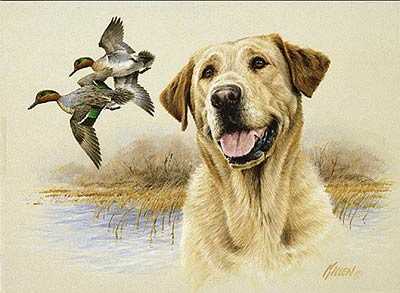 Wildlife Art Prints Plus Original Paintings With A Wide