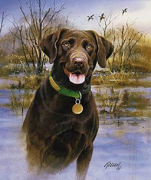 Pics For > Chocolate Labrador Retriever Hunting