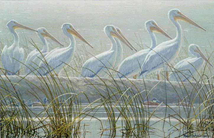 detail by Robert Bateman 20x24 Poster PELICAN ART PRINT Bounty of the Wetlands