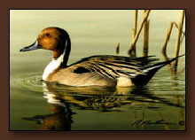 Bob Hautman Duck Stamp Print
