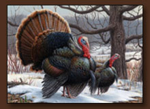 Joe Hautman Turkey Art Print